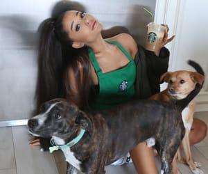 ariana grande, starbucks, and dog image