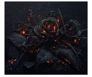 black beauty, rose on fire, and 🌸 image