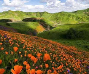 flowers, love, and mountains image