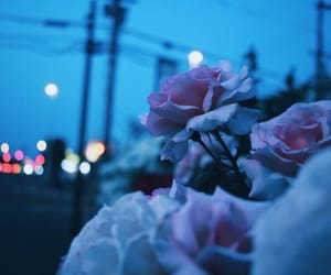 flowers, grunge, and night image