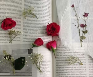 book, roses, and tumblr image