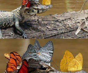 butterfly, crocodile, and animal image