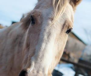caballo, horse, and luna image