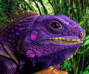 jungle, lizard, and purple lizard image
