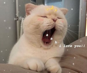 cat, cute, and I Love You image