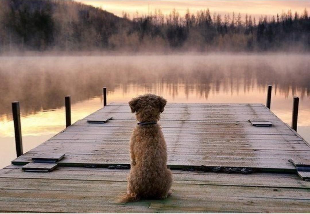 Одиночество картинки животных