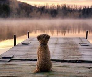 dog, animal, and lake image