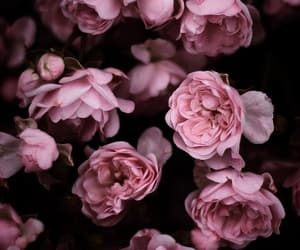 flowers, aesthetic, and beauty image