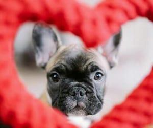 cachorro, dog, and heart image