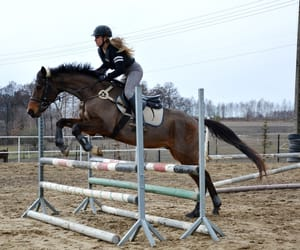 equestrian, showjumping, and equine image