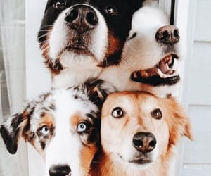 dog, animal, and cute image