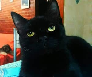 cats black mistery image