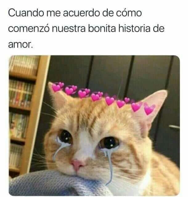 Ya Publique 2 Imágenes Con Gatos V On We Heart It
