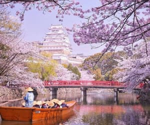 blossom, japan, and spring image