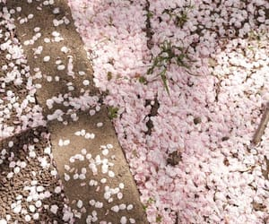 pink, spring, and aesthetic image