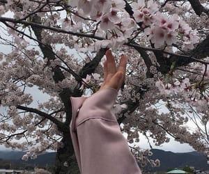 sakura, aesthetic, and japan image