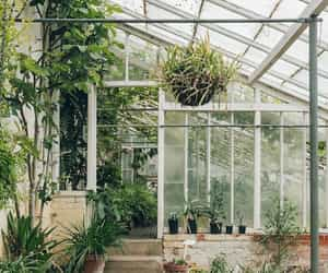 garden, greenhouse, and plants image