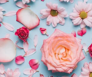 flower, flowers, and pink image
