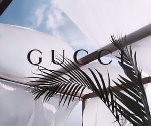 gucci, palm trees, and theme image