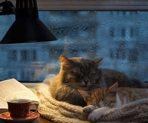 cat, rain, and autumn image