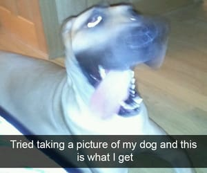 funny, great dane, and snapchat image