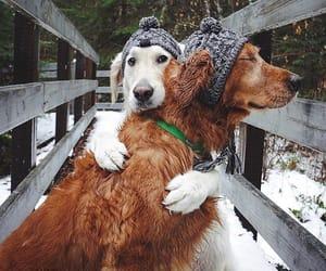 animal, dog, and winter image