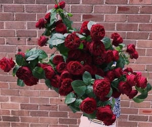 gift, red roses, and love image