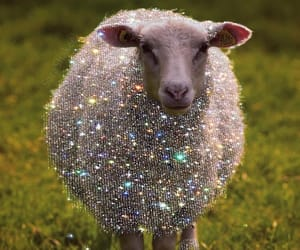 aesthetic, sheep, and wallpaper image