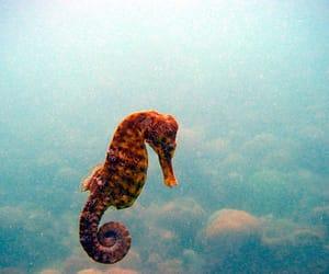 sea, seahorse, and ocean image