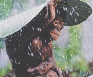 monkey, animal, and rain image