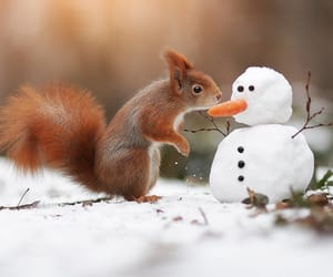 animals, cute, and cold image