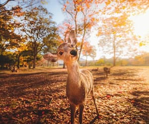 animal, cute, and autumn image
