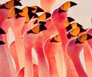 pink, flamingo, and bird image