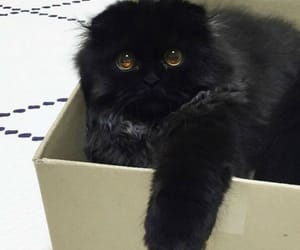 black, cat, and eyes image