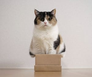 cat and box image