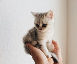 kitten, animals, and cat image