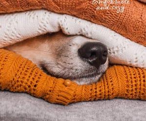 autumn, cozy, and dog image