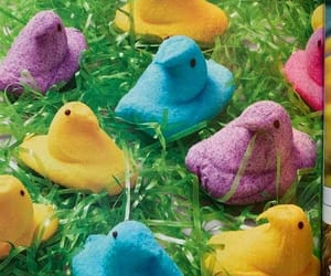 chicks, colorful, and spring image