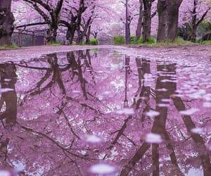 flowers and sakura image
