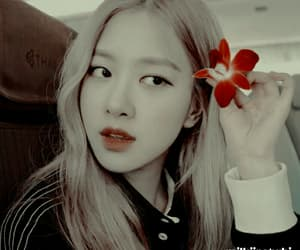 aesthetic, rose, and blackpink image