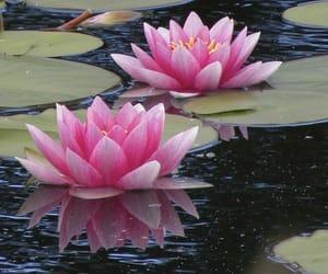 beautiful, lily, and красота image