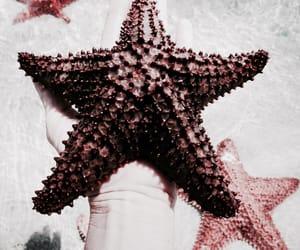 beach, starfish, and summer image