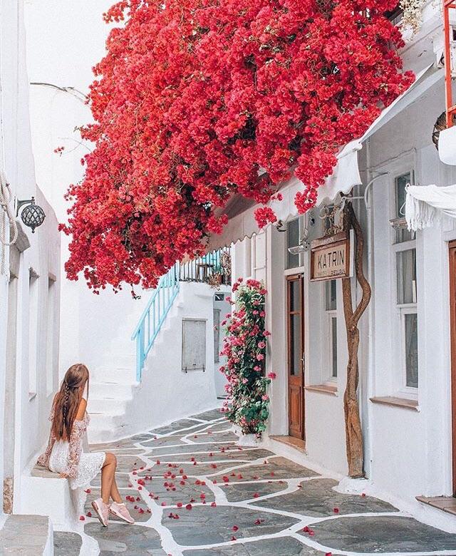 Bom Dia Flores Do Meu Amor On We Heart It