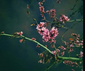 dark, night, and flowers image