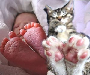babies, kitten, and baby image