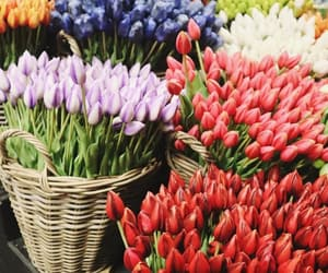 flowers, spring, and tulips image