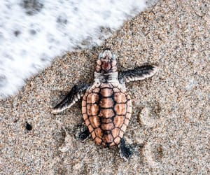 turtle, beach, and animal image