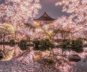 japan, nature, and spring image