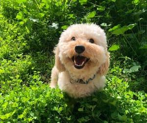 aesthetic, carefree, and dog image