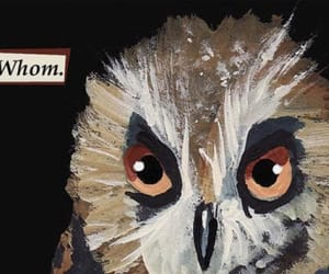 troubled birds image